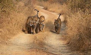 10 תצלומים מרהיבים מהטבע הפראי של הודו והסיפורים שמאחוריהם
