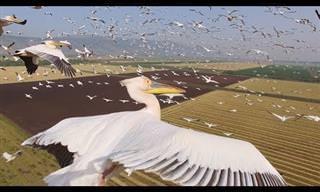 ציפורים נודדות בשמי הארץ