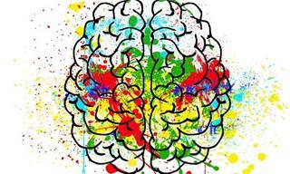 12 עובדות מרתקות על המוח
