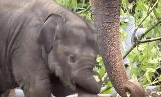 פילים לומדים להתמודד עם החדק