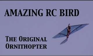 ציפור מכנית מדהימה!