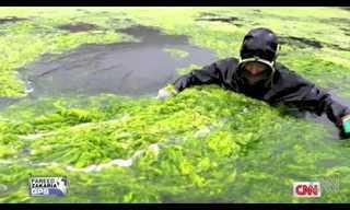 אצות ירוקות תוקפות את סין - לא סרט בדיוני!
