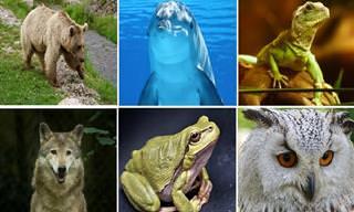 בחנו את עצמכם: באיזה חיה הייתם בוחרים?