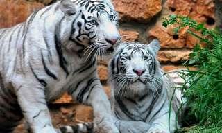 ביקור בגן החיות האינטראקטיבי של בא במייל