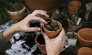 15 טיפים יצירתיים לגידול צמחים