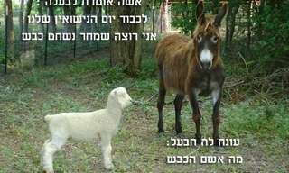 החמור והכבש - בדיחה גדולה