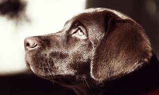 כיצד לבצע עיסוי לכלב לטיפול בבעיות שונות