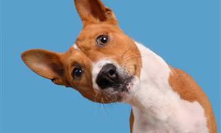 15 דיוקנאות כלבים מצחיקים וחמודים במיוחד