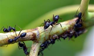 שיטות הדברה ירוקה לחרקים נפוצים