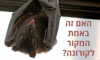 18 עובדות מפתיעות על עטלפים