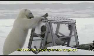 מפגש מדהים עם דוב קוטב בטבע!