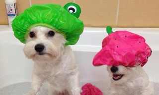 19 טיפים שימושיים לבעלי כלבים
