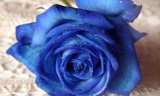 ורד כחול - סיפור מרגש שנותן פרספקטיבה לחיים
