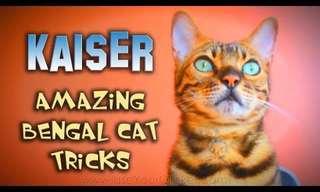 טריקים מדהימים של חתול מאולף