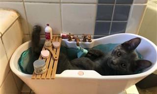 16 תמונות מצחיקות של חתולים שעשו לנו את היום