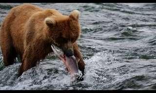 מסע מדהים בנופי אלסקה!