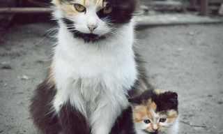 בעלי חיים וההעתקים הקטנים שלהם