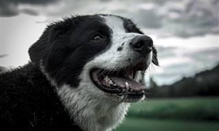 רעמים, דיכאון ובעיות עור: כך תגנו על הכלב שלכם מהסכנות שמאיימות עליו בחורף