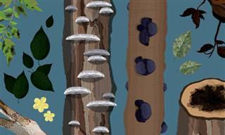 איך לזהות מחלות בצמחים ולטפל בהם