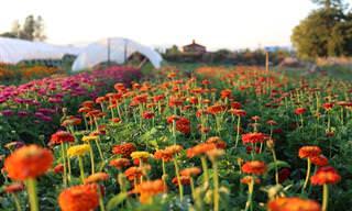 סיפורה של ארין בינזקין: מחיים עירוניים לחוות פרחים מצליחה!