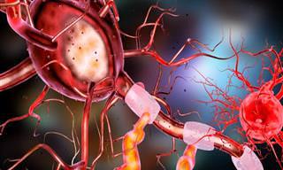 הסבר פשוט ומרתק על המוח ומערכת העצבים