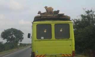 הדרך האפריקאית - מצחיק!