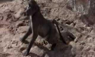 חיות משתכרות בספארי האפריקני - קורע מצחוק!!!
