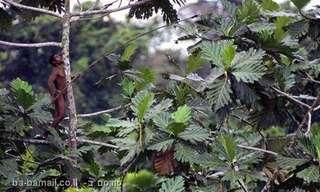 תמונות נדירות של שבט שחי ביערות הגשם