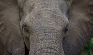 24 תמונות נפלאות מהפארק הלאומי קרוגר שבדרום אפריקה