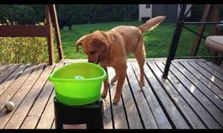 התלהבות ללא קץ: צפו בסרטון מצחיק של כלב המגלה מכונה מיוחדת