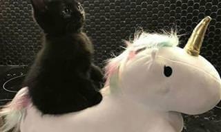 16 תמונות חמודות ומצחיקות שיגרמו לך להתאהב בחתולים שחורים