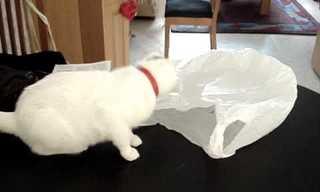 הסקרנות הרגה את החתול - מקור הביטוי