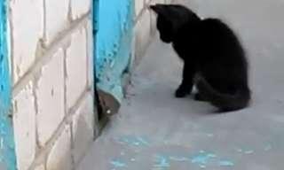 חתול בא לעזרתו של כלב - מצחיק!