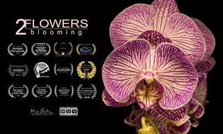 צפו בסרטון עטור פרסים שמציג את היופי המרהיב של עולם הצומח