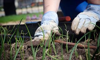 12 מדריכים לטיפול בגינה הביתית וטיפוחה