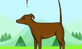 8 תנוחות הזנב הנפוצות ביותר אצל כלבים ומשמעותן
