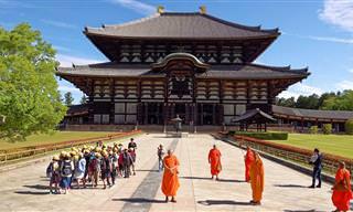 סרטון של העיר היפנית הקסומה וההיסטורית – נארה