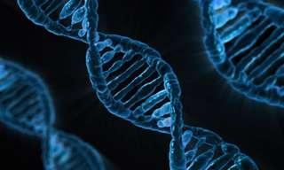 גנטיקה יהודית
