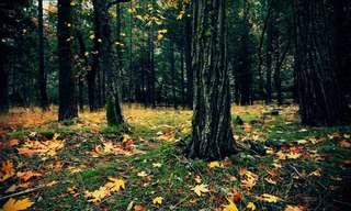 כשהסתיו מקשט את הטבע היפה מכל!