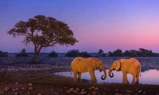 תמונות נפלאות של הטבע