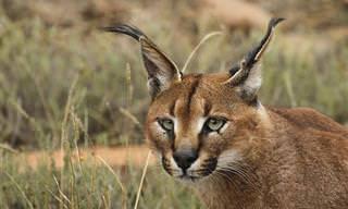 8 בעלי חיים טורפים שאפשר לראות בישראל