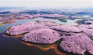 17 תמונות מרהיבות של פריחת האביב בסין