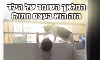 חתול שומר על ילד קטן במרפסת