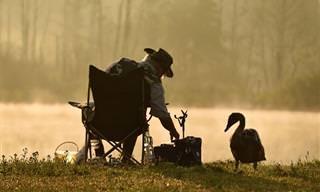 סיפור מרגש ומעורר מחשבה על האומץ של ברווזון קטן