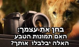 מבחן מצא את ההבדלים עם תמונות טבע וחיות