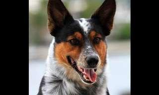 פעלולים מדהימים של כלב האקסטרים!