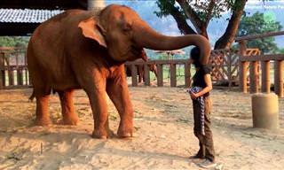 אוסף מרגש של חיות מעניקות אהבה וחיבוקים לבני אדם