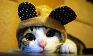 חתולים חמודים בכובעים