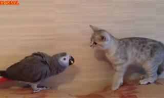 הסרטון החמוד הזה חושף את היריבות הכי מצחיקה בממלכת החיות!