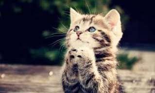 עצות לחיים טובים מהחתולים הכי חמודים בעולם